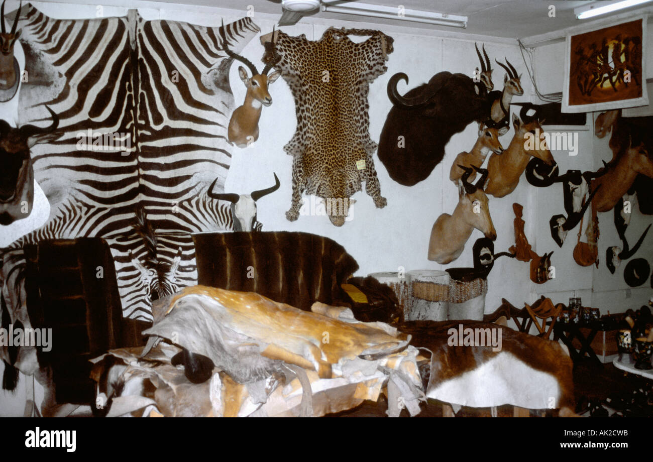 Skins and trophies of animals on sale at a shop in Tanzania. - Stock Image