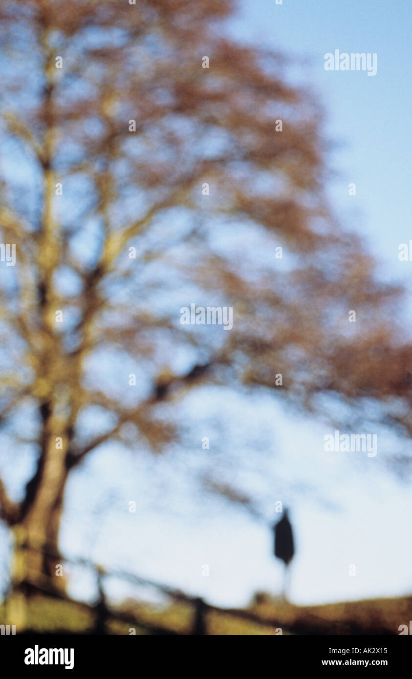 Impressionistic solitary figure in a black jacket standing under a tree on an embankment under a blue winter sky - Stock Image