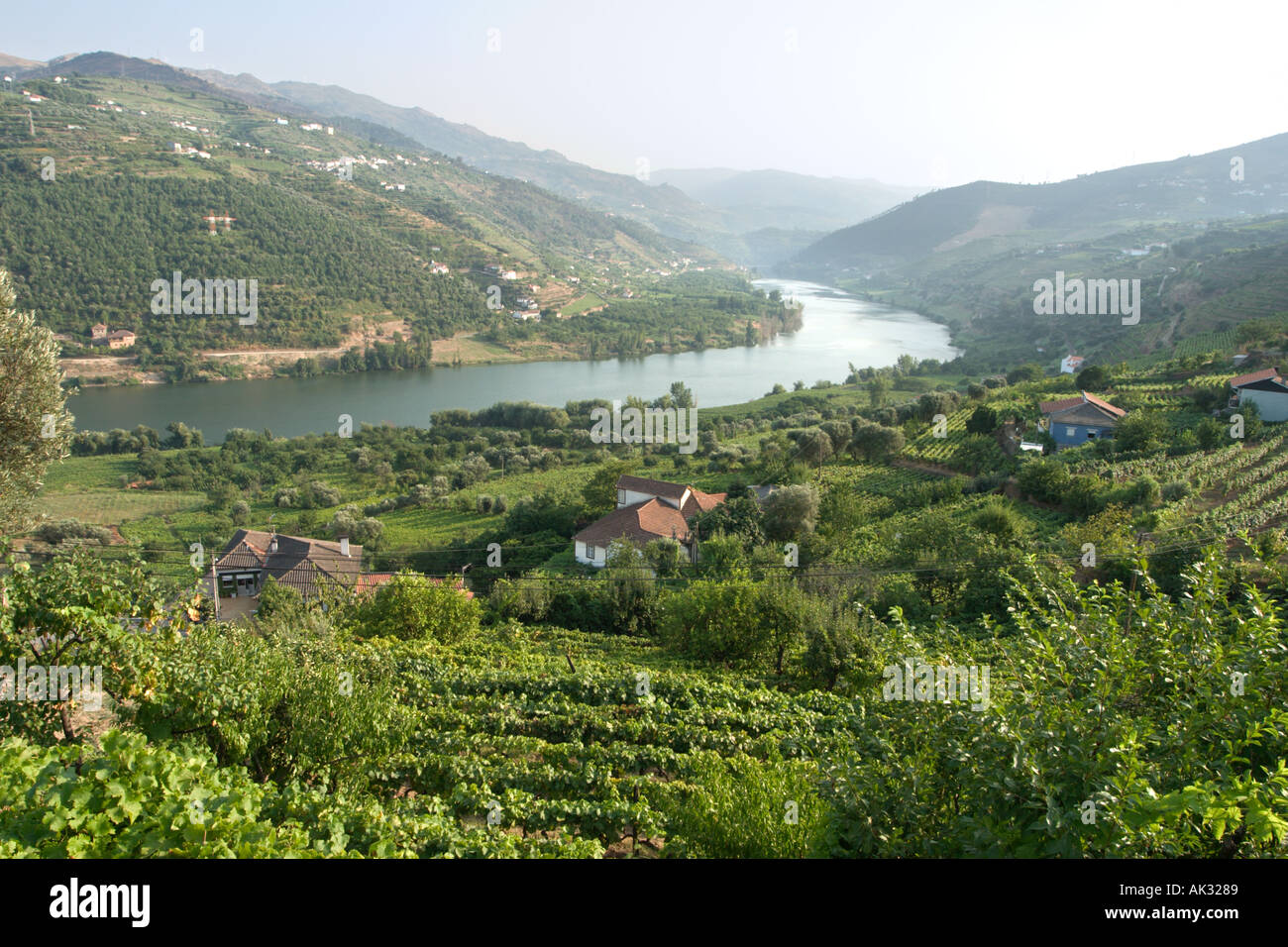 Vineyards in the Douro Valley, Portugal - Stock Image
