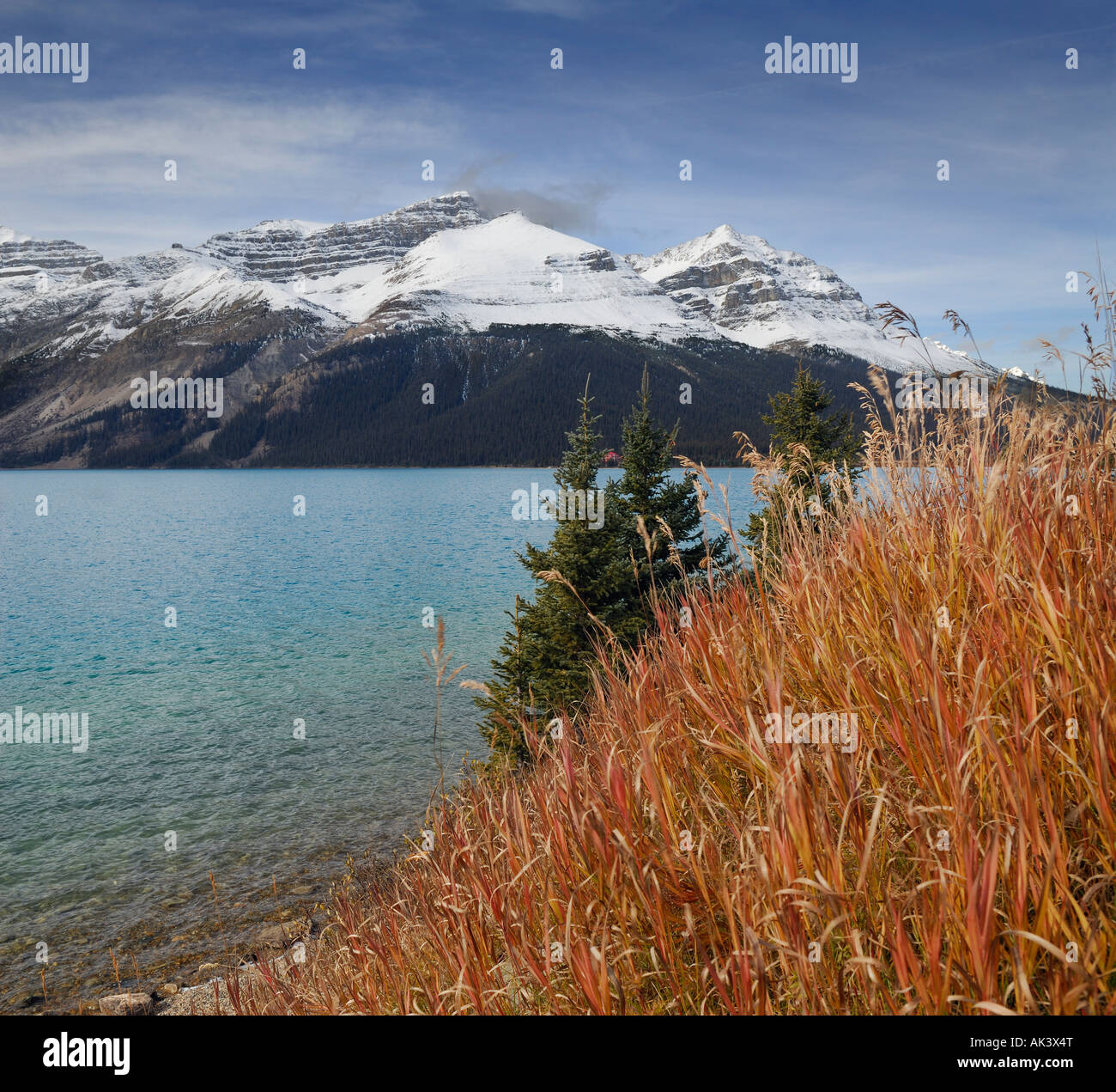 Wild red grass at Bow Lake and Num Ti Jah Lodge - Stock Image