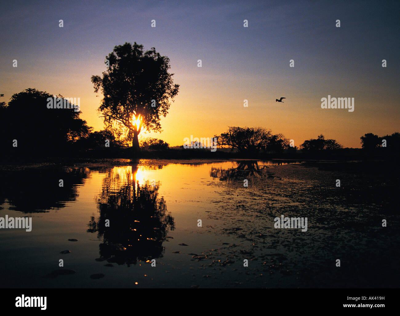 Australia, Norhern Territory, Kakadu NP, Yellow Waters, Sunset over river, Stock Photo