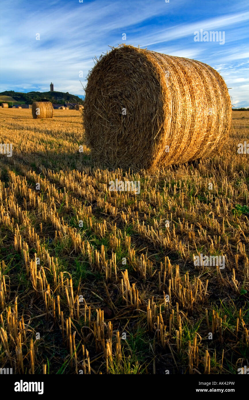 Hay bails at Scrabo Tower, Newtownards - Northern Ireland. - Stock Image