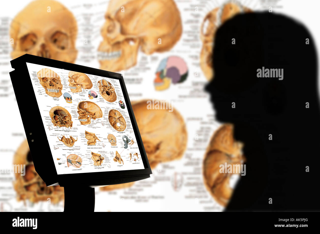 anthropology student studying skeletons and skulls on computer monitor - Stock Image