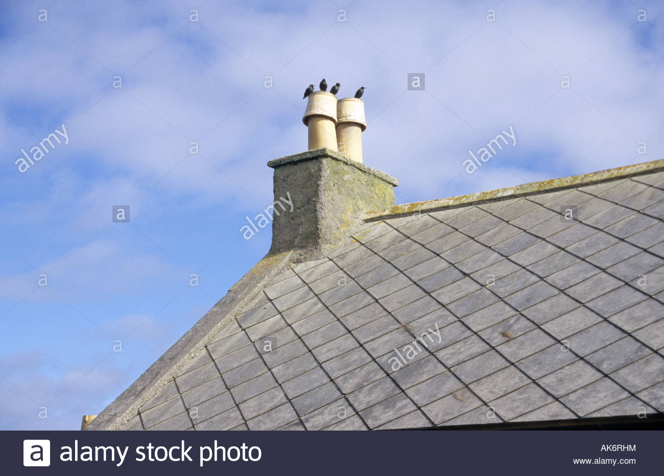 Four starlings on chimney on the Isle of Great Bernera Scotland - Stock Image