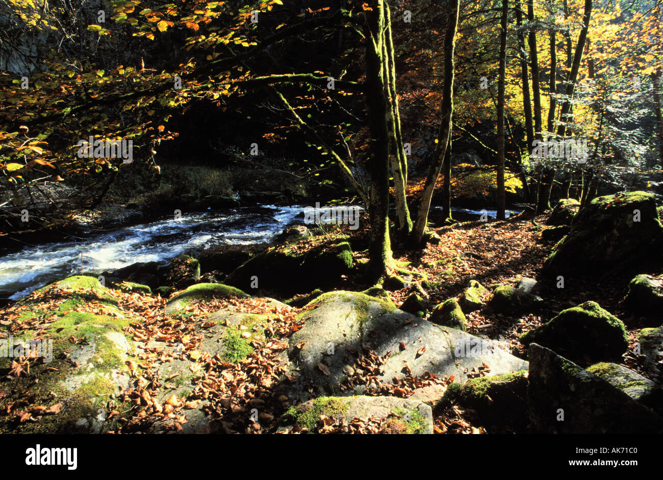 Wutachschlucht at the Black Forest rocks trees autumn leaves Baden Wuerttemberg Germany - Stock Image