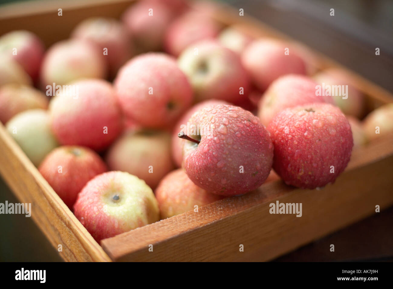 Box of Apples on an Organic Farm - Stock Image