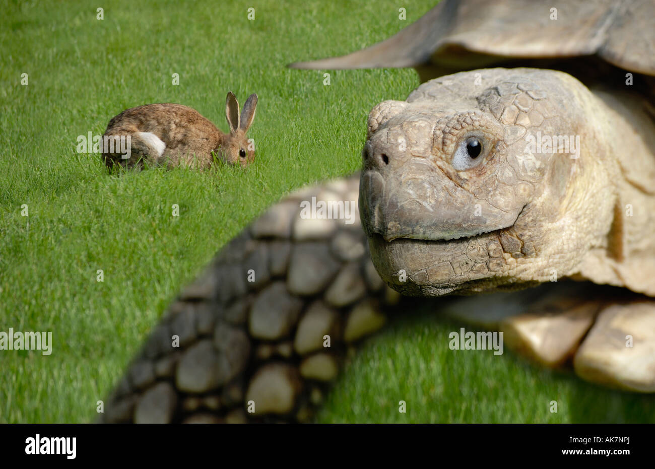 Tortoise and hare - Stock Image