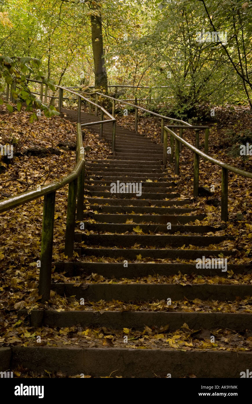 Autumn in Grin Low Woods Country Park - Stock Image