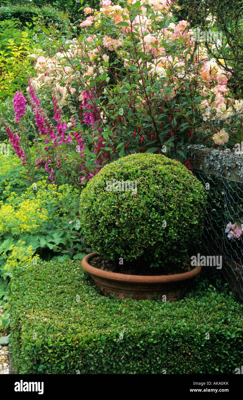 Frith Lodge Sussex boxwood topiary sphere in pot within topiary cube - Stock Image