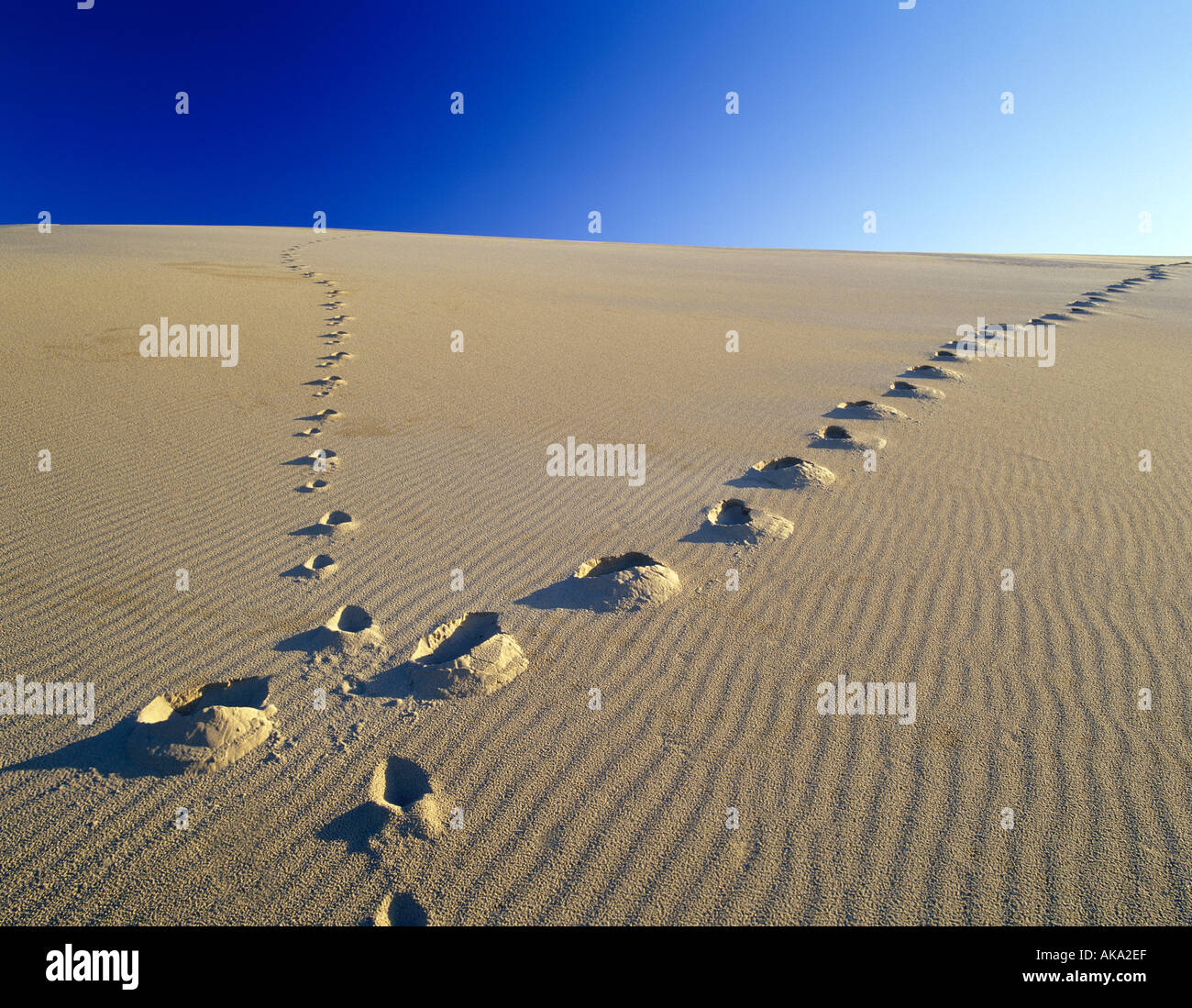 M00403M tiff Footprints up sand dune Oregon Dunes National Recreational Area Oregon - Stock Image