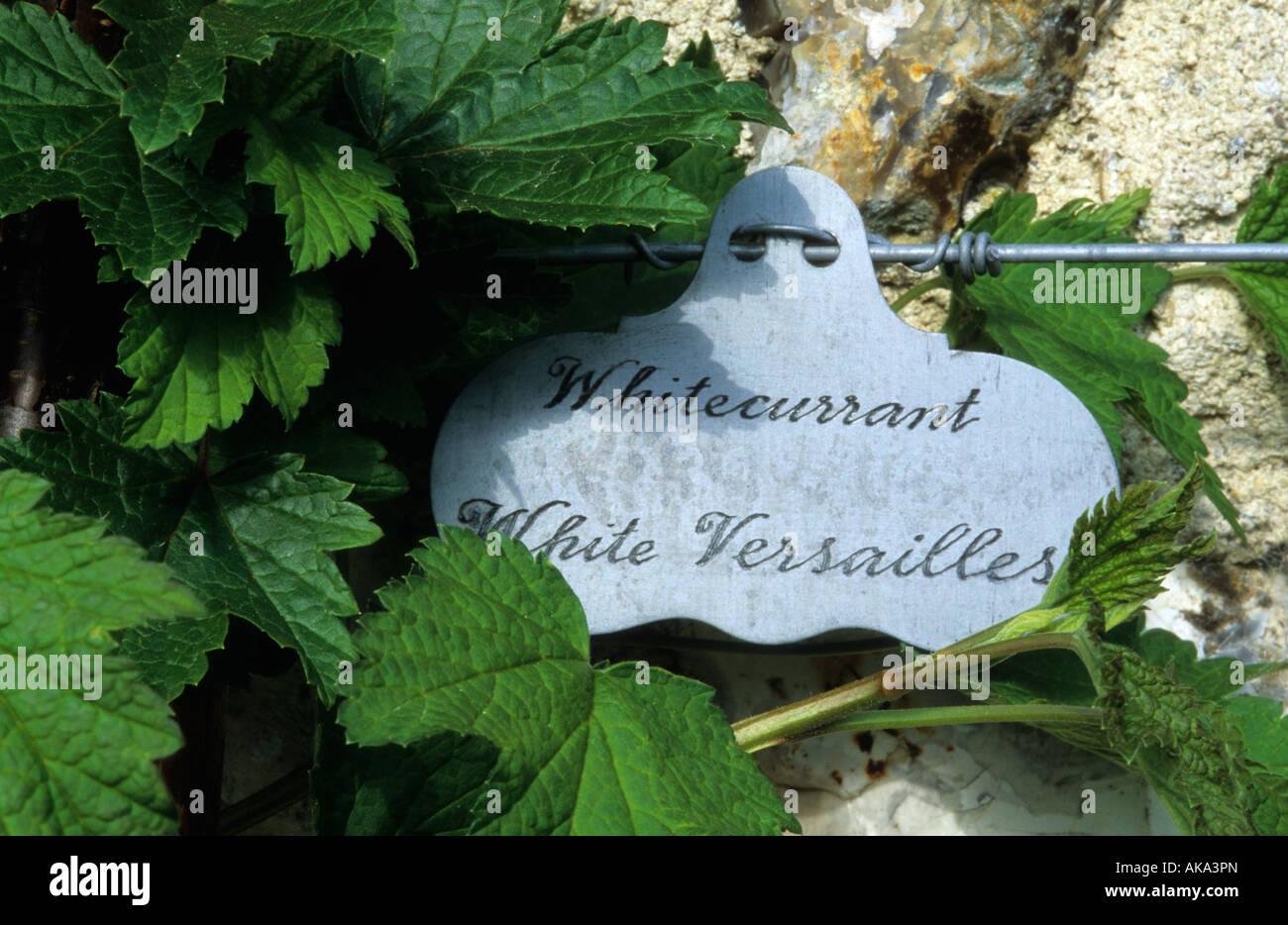 West Dean Sussex hand written plant label - Stock Image