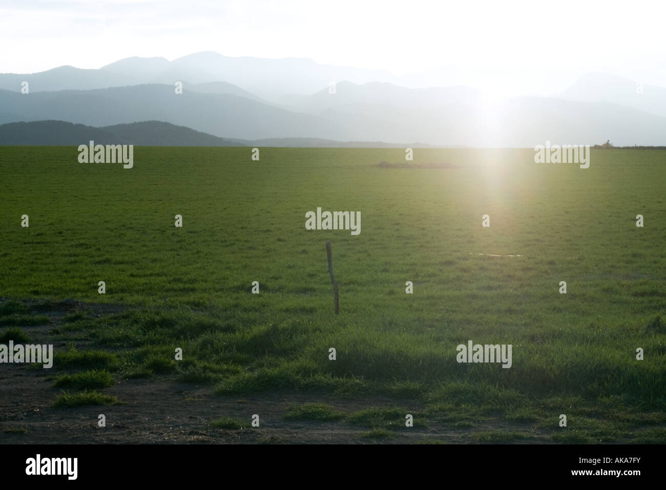 Green field with mountains in background - Stock Image