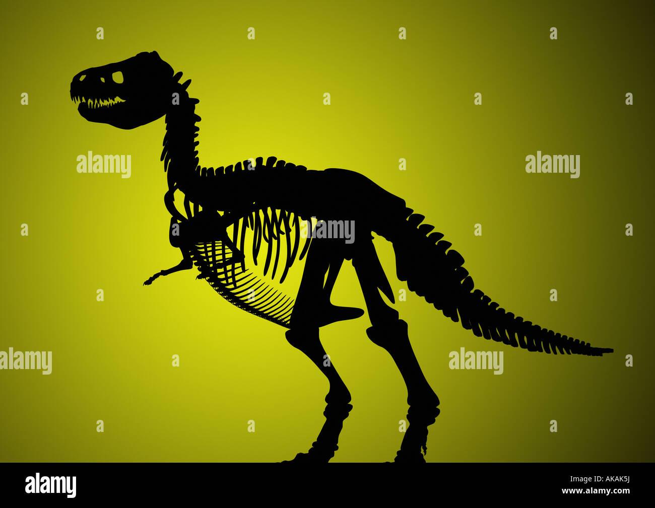 Dinosaur skeleton Dinosaurier Skelett - Stock Image