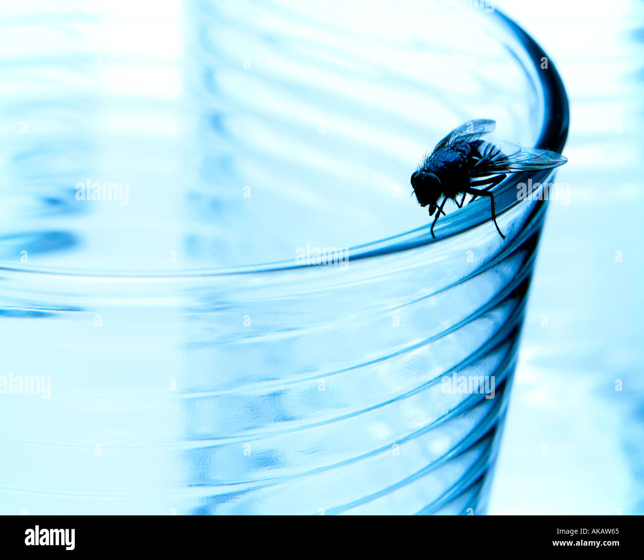Drinking glass and a house fly - Stock Image
