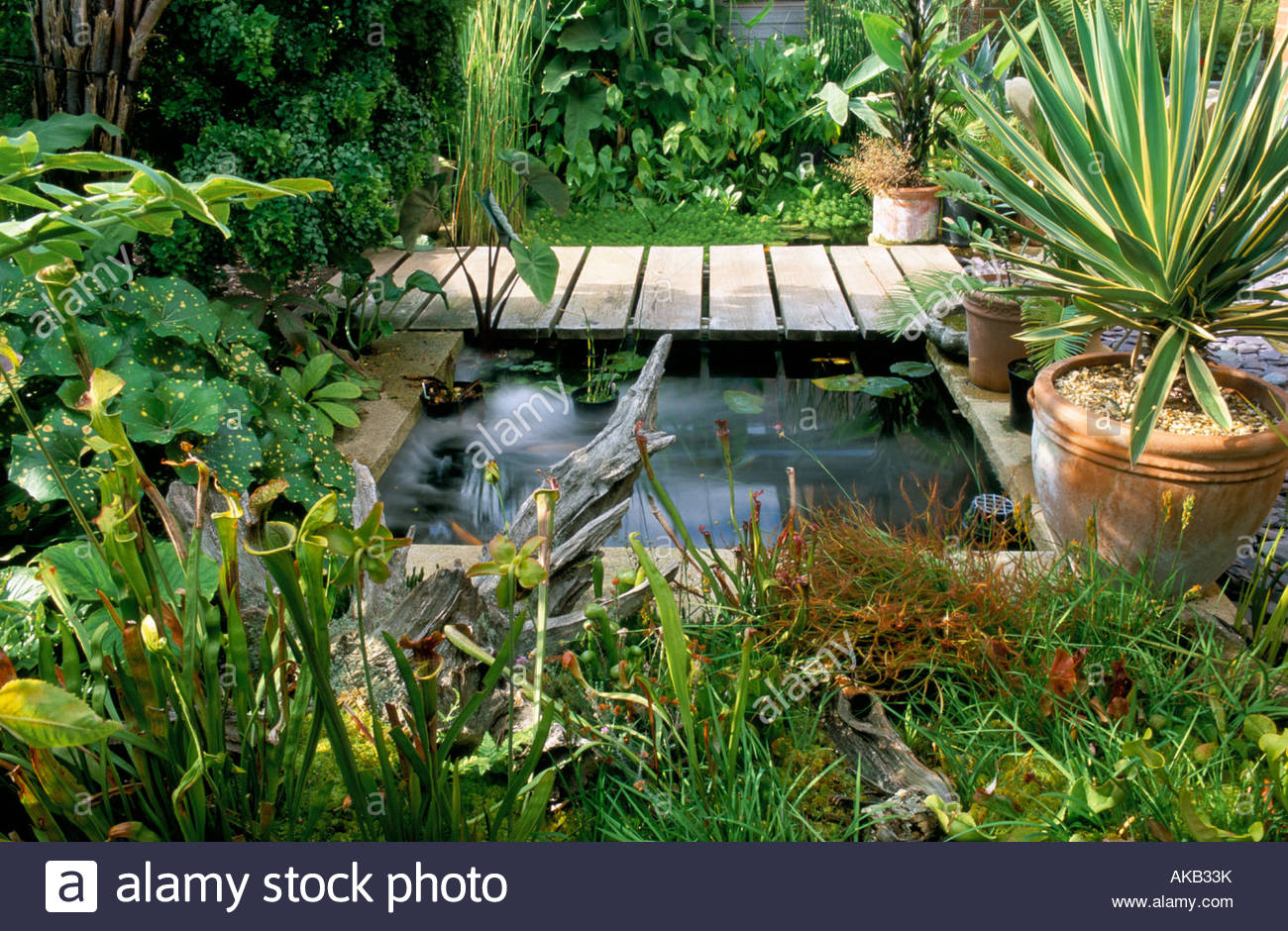 Waterford Lane Hampshire Design Peter Read Small Pond With Flat Bridge And  Exotic Plants   Stock