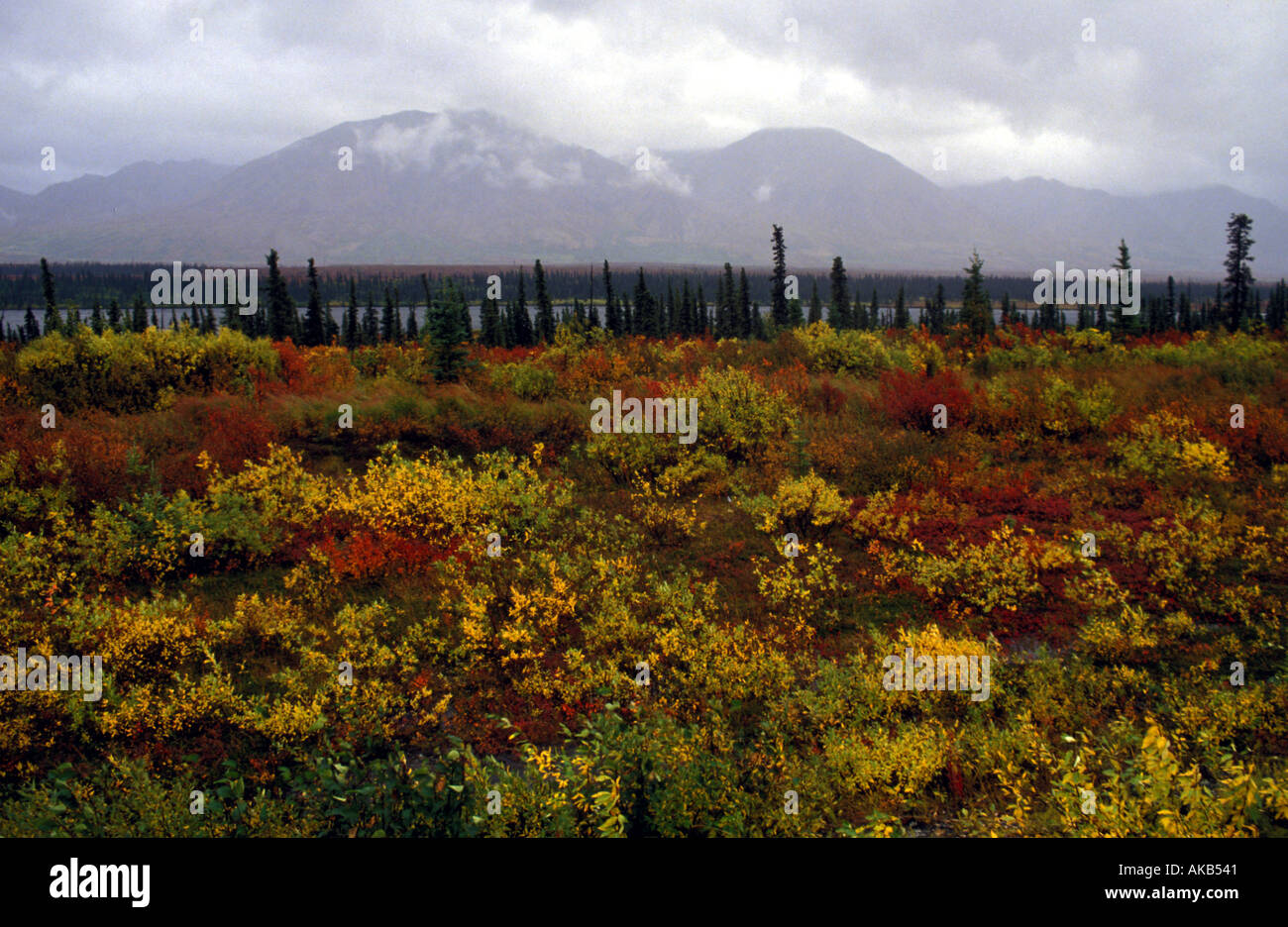 Vertical pines and autumn hues of red green and yellow color a countryside as mountains reach into clouds  - Stock Image