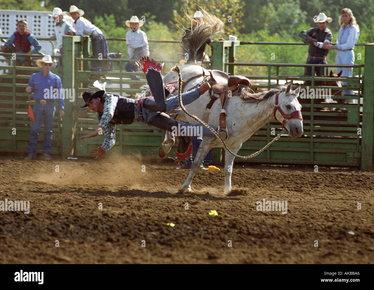Rodeo competitor falling off bronco - Stock Image