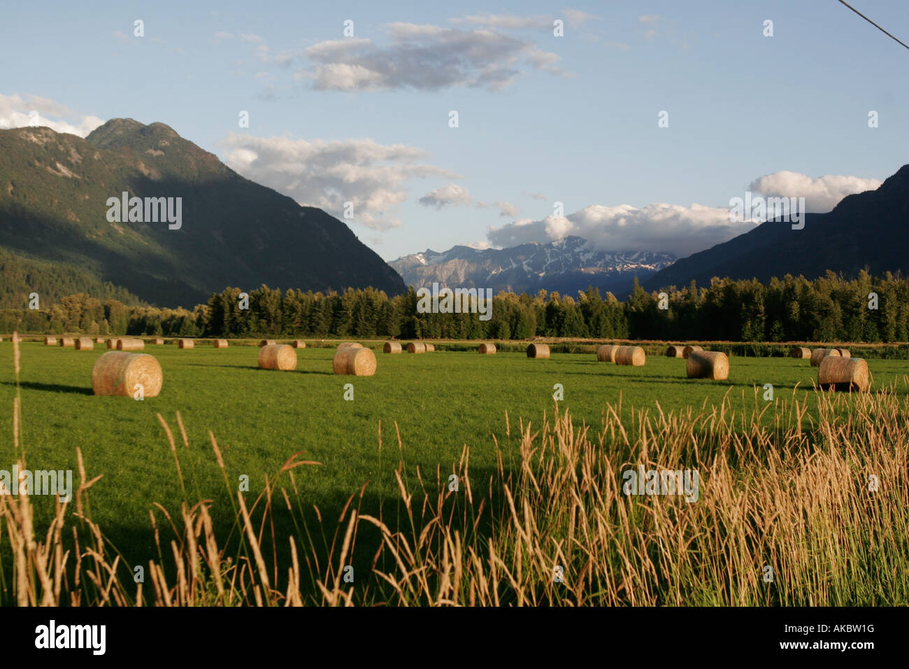 Farm Field At Sunset In The Mountains Of Pemberton Bc Hay