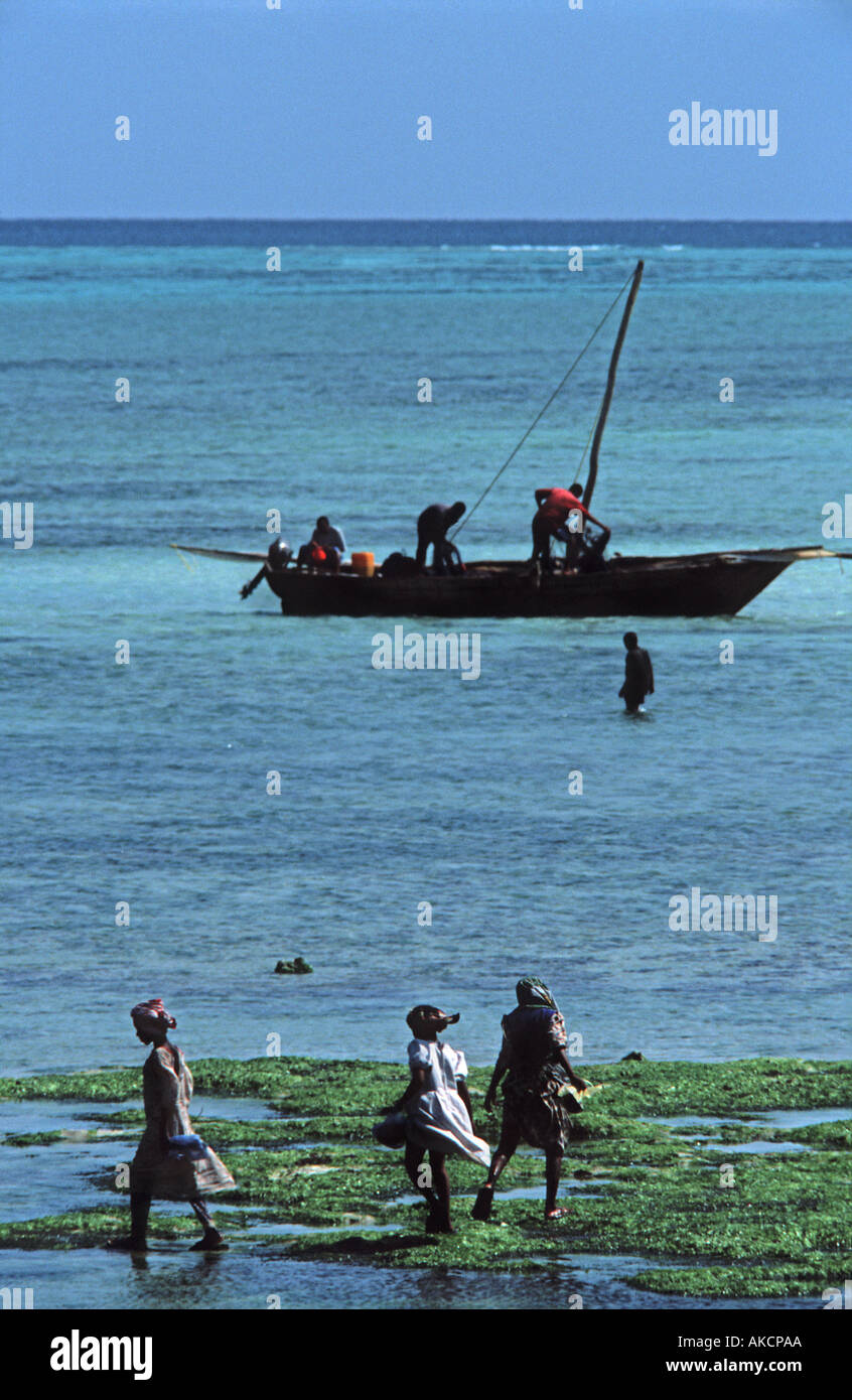 Locals flock out at low tide to collect seashells and seaweed Nungwi Unguja Zanzibar Tanzania E Africa silhouetted figures - Stock Image