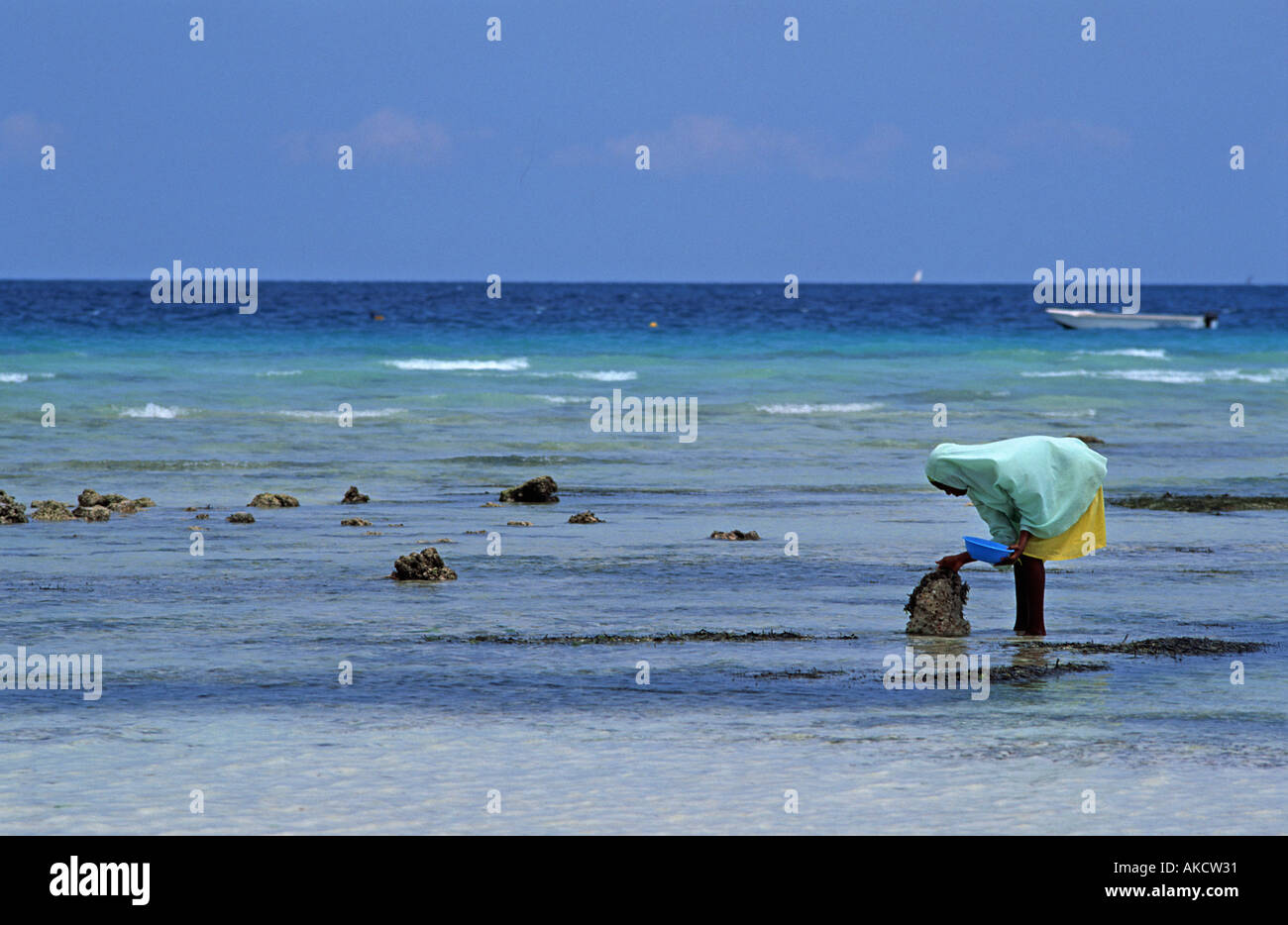Girl from Nungwi collecting sea shells and cockles at low tide Headscarf Nungwi Unguja Zanzibar Tanzania E Africa - Stock Image