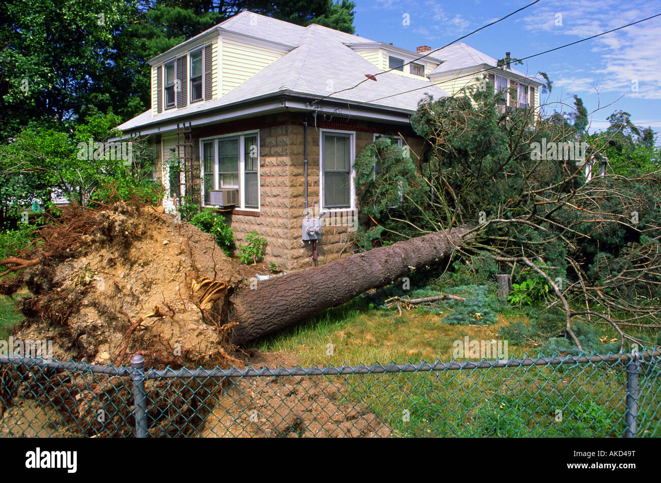 Wind storm aftermath a fallen tree narrowly missed a house - Stock Image
