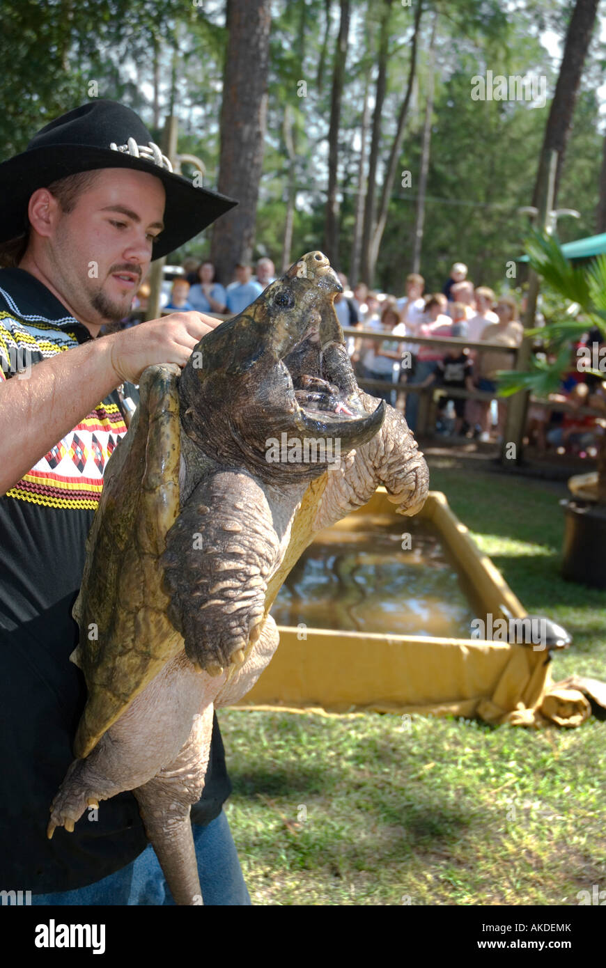man showing alligator snapping turtle to audience during show at Alligator Fest Lake City Florida - Stock Image