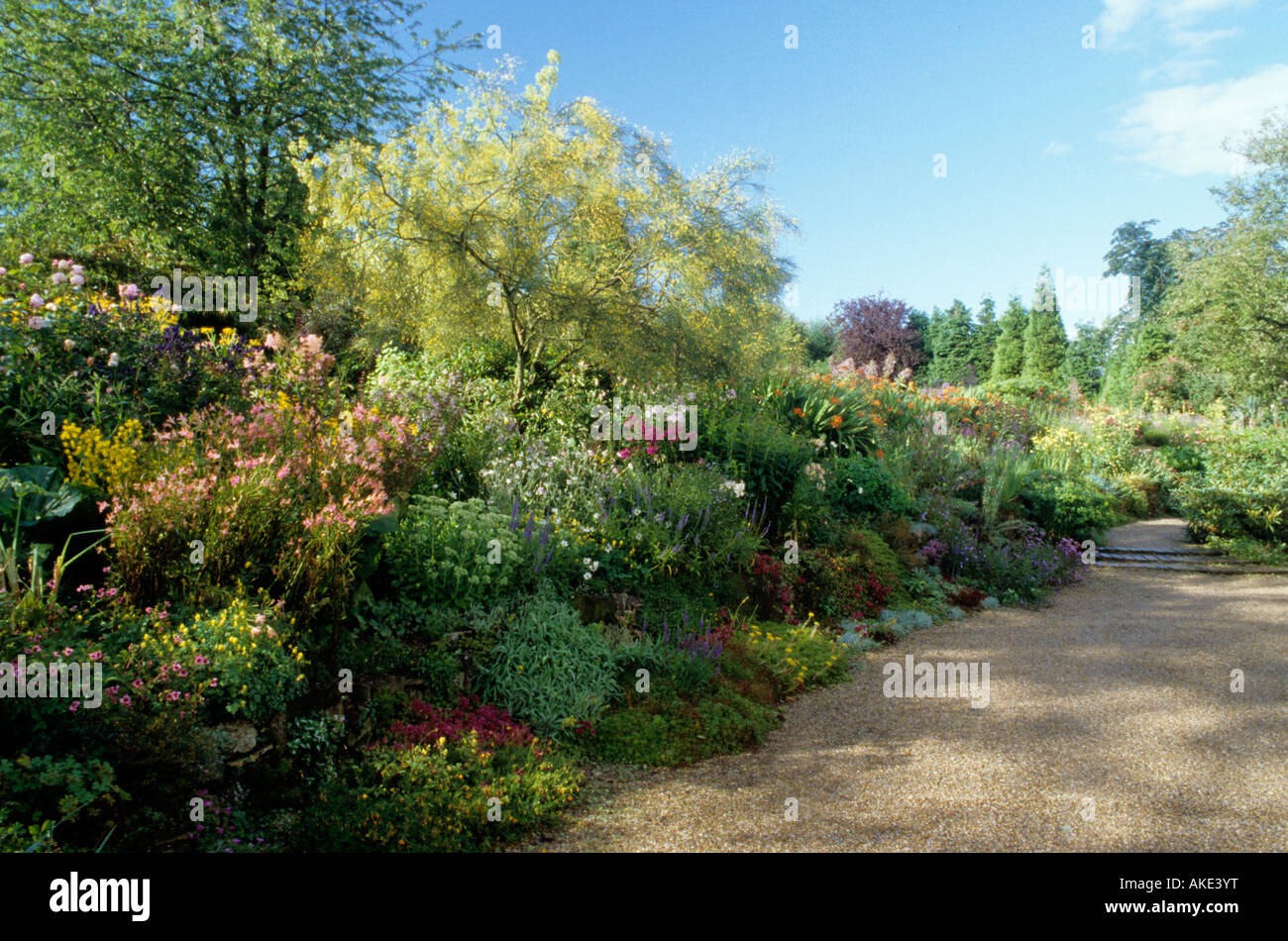 Cobblers Sussex mixed border with staggered heights in Summer Genista - Stock Image