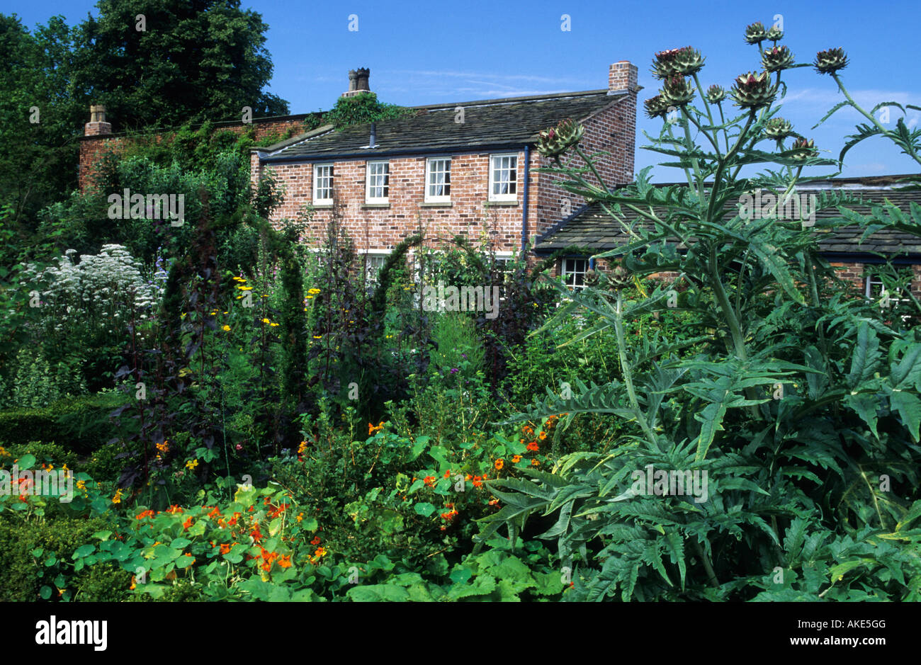 Gardener's Cottage Cheshire country cottage kitchen garden with view through to house and flower garden cardoon - Stock Image