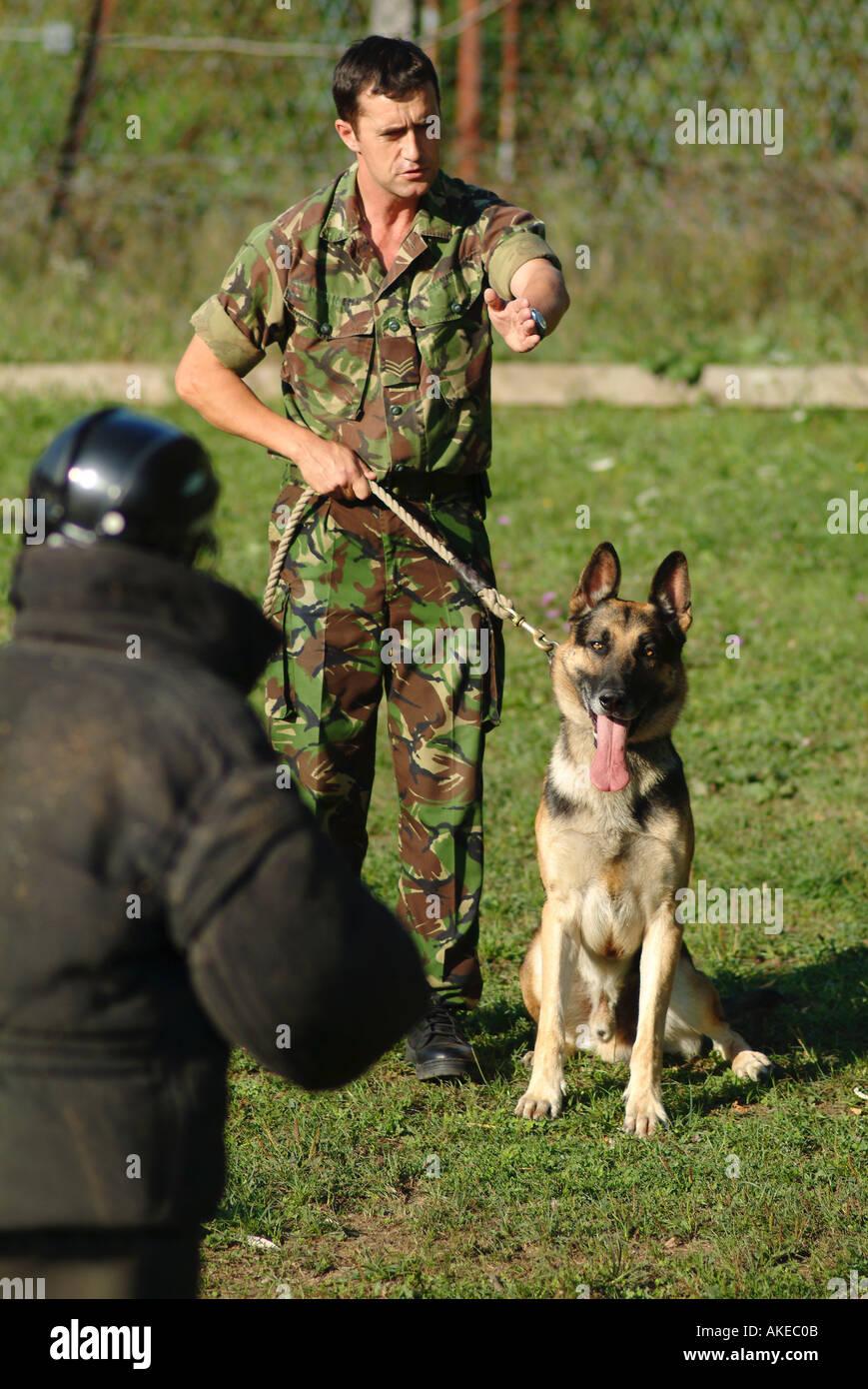 British Army Dog Handler During a Training Exercise - Stock Image