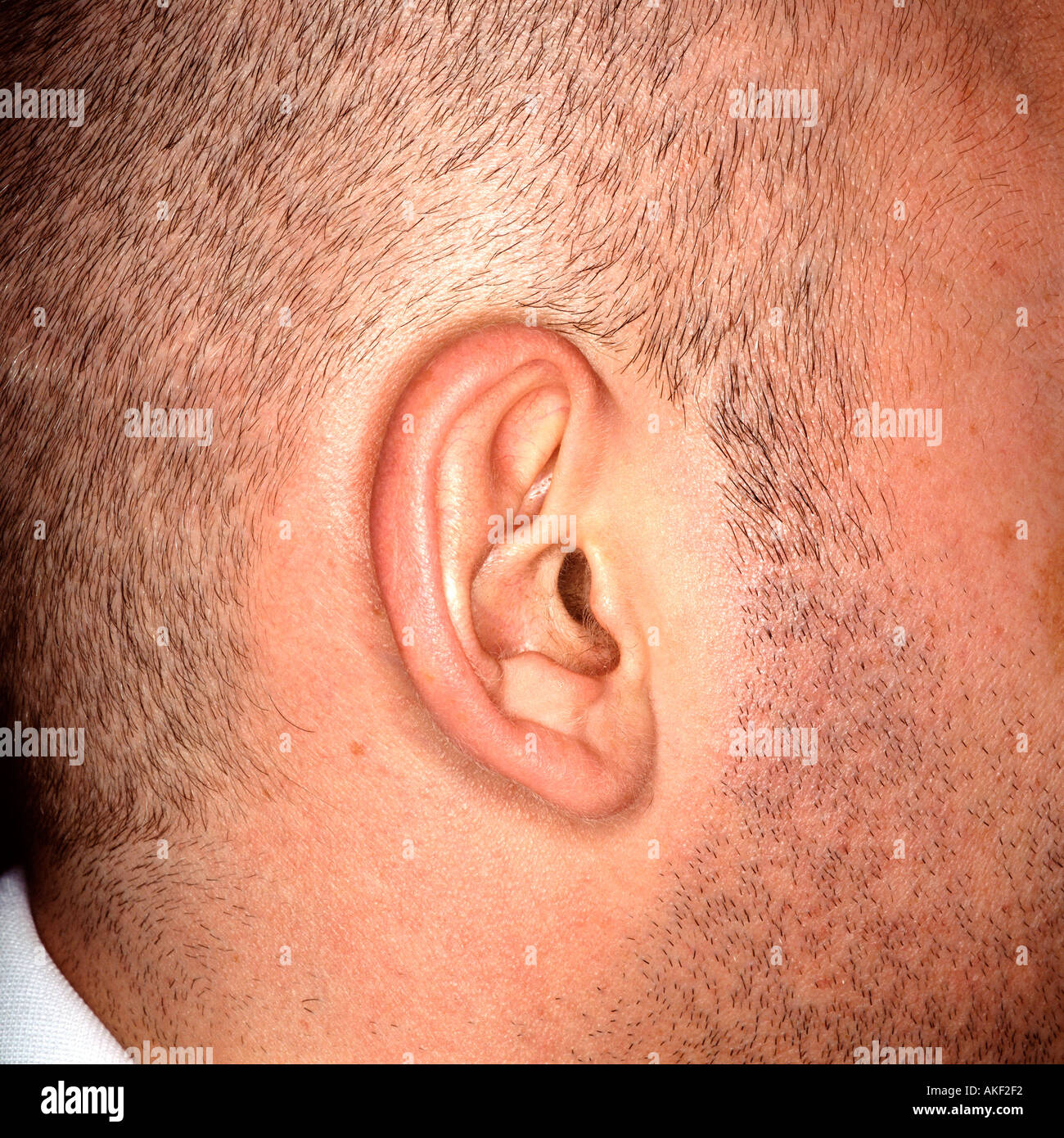 Right ear of Caucasian male - Stock Image