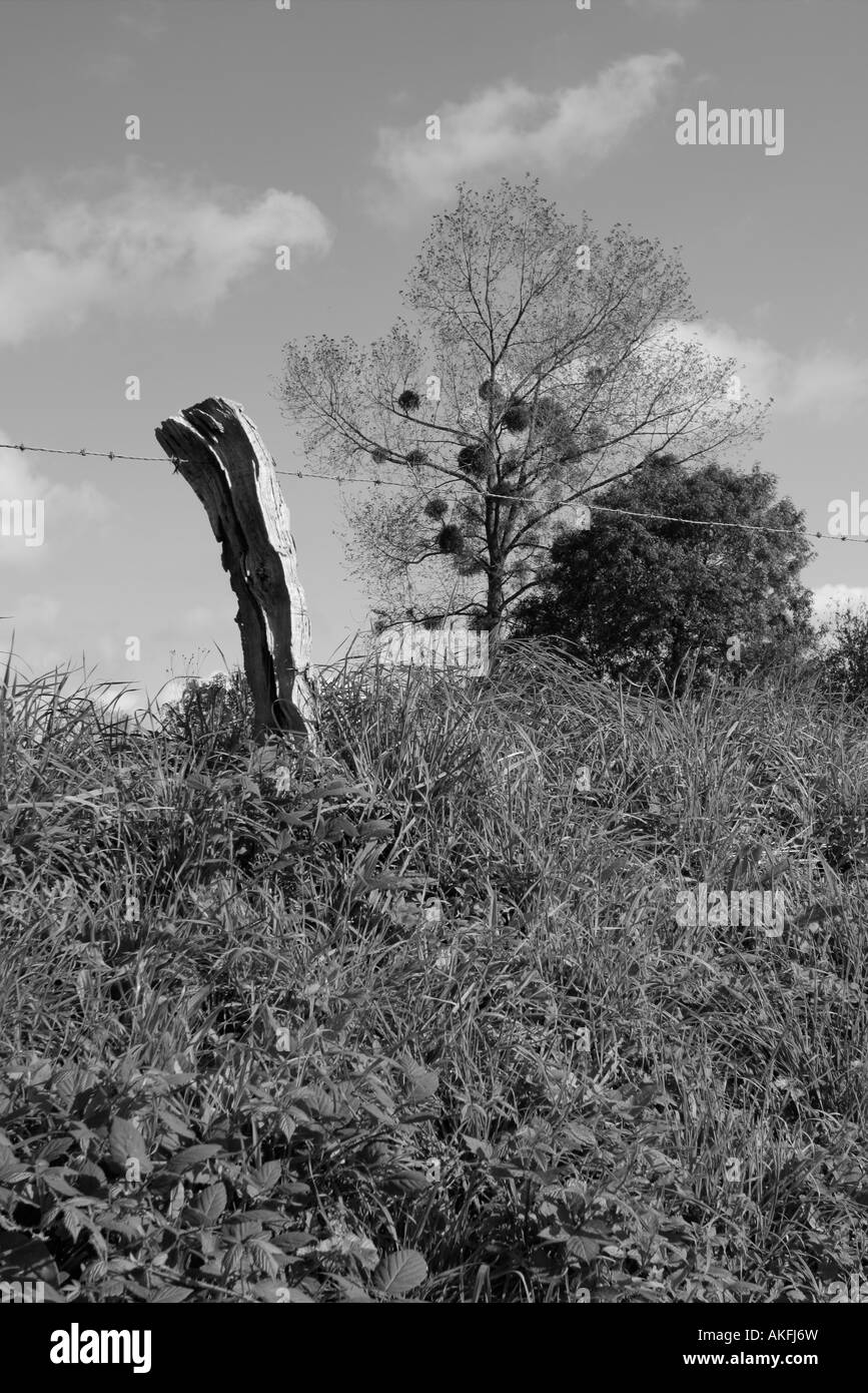 Crooked fence post barbed wire autumn trees and crows nests in rural France - Stock Image