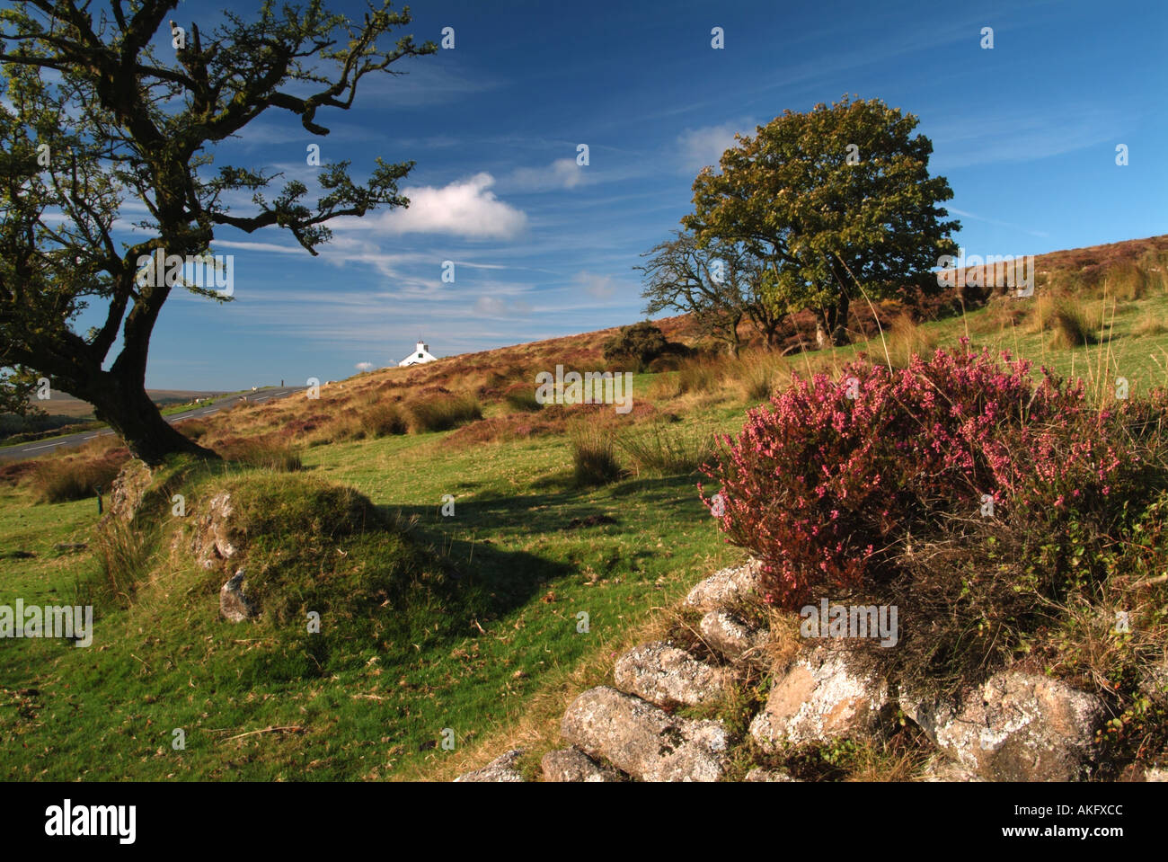Summer heather on drystone wall Headland Warren Dartmoor Devon UK - Stock Image