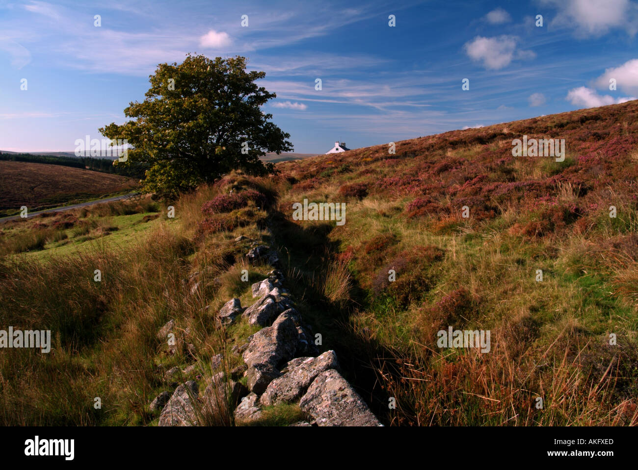 The Warren House Inn Dartmoor Devon UK - Stock Image