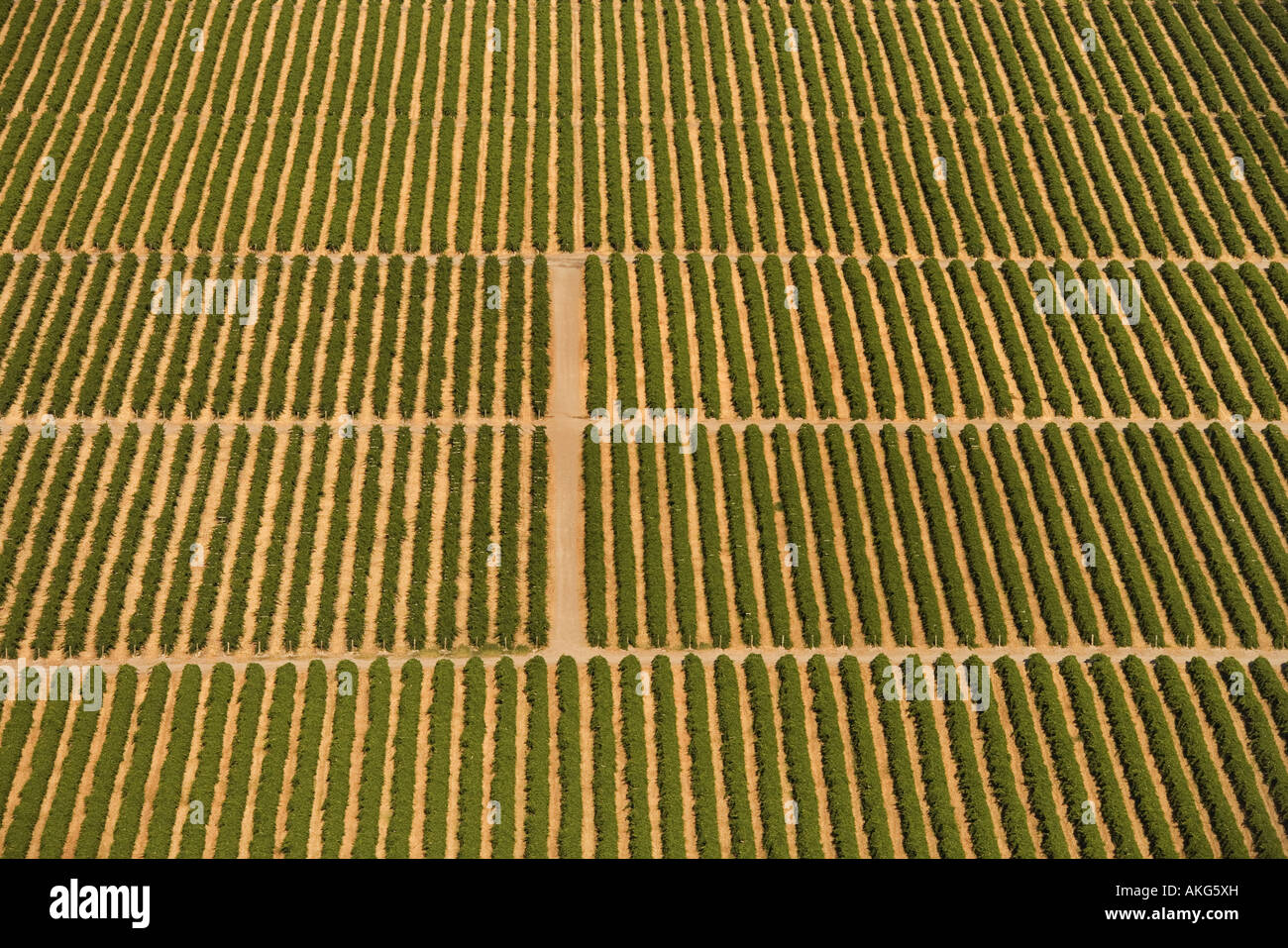aerial view of farmland with rows of crops stock photo