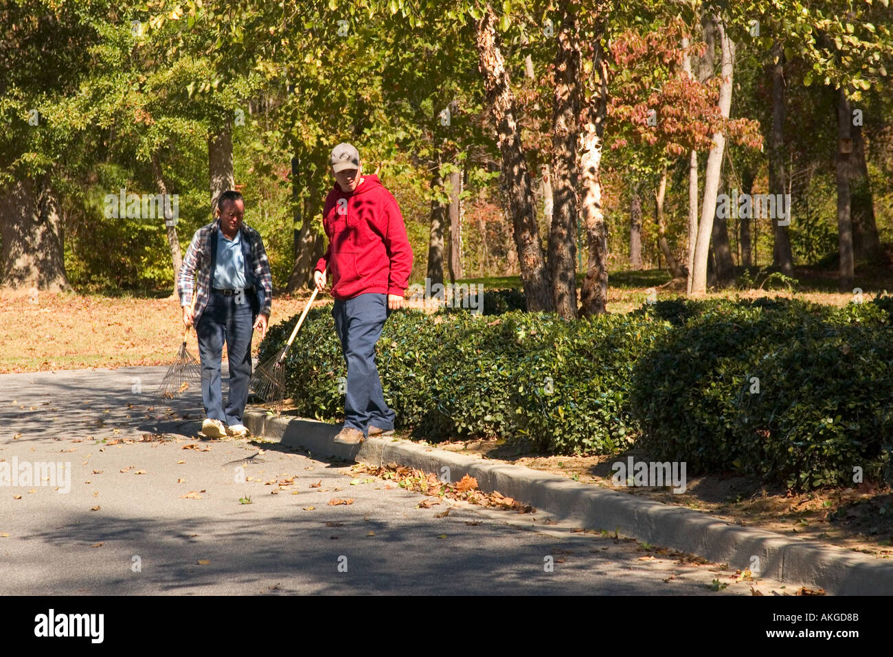 Workers rake Fall leaves at Saluda Shoals Park Columbia South Carolina USA Stock Photo