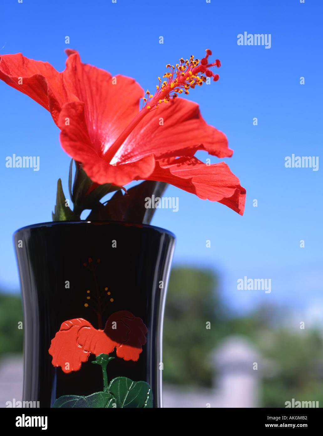 Hibiscus Flower In Vase In Stock Photos Hibiscus Flower In Vase In