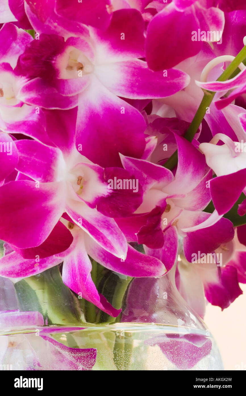 Bouquet of pink orchid flowers Orchidaceae in a glass vase with water - Stock Image