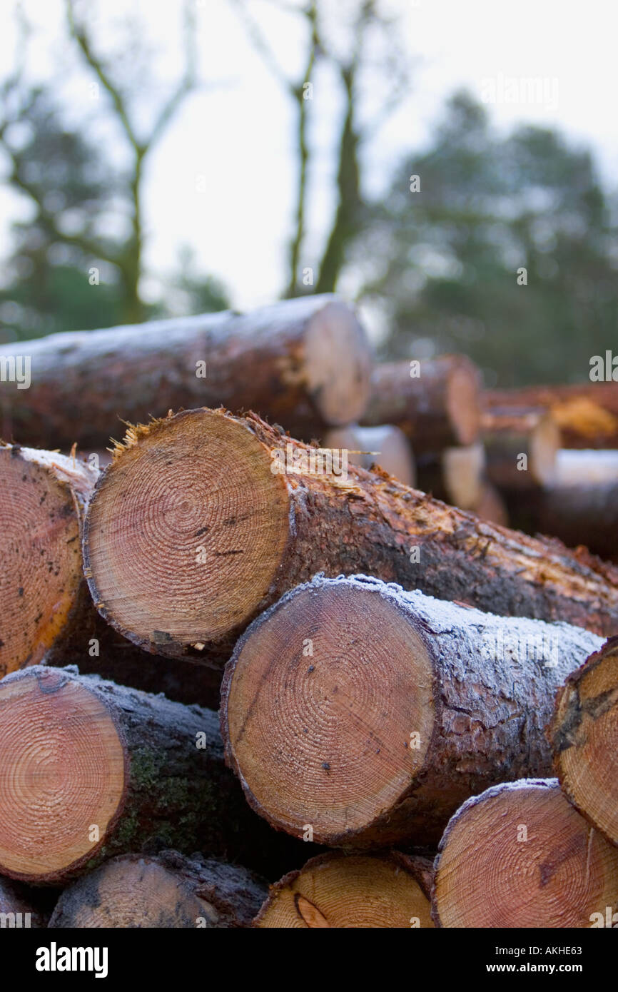 Softwood Sawn log stack with out of focus trees in background - Stock Image