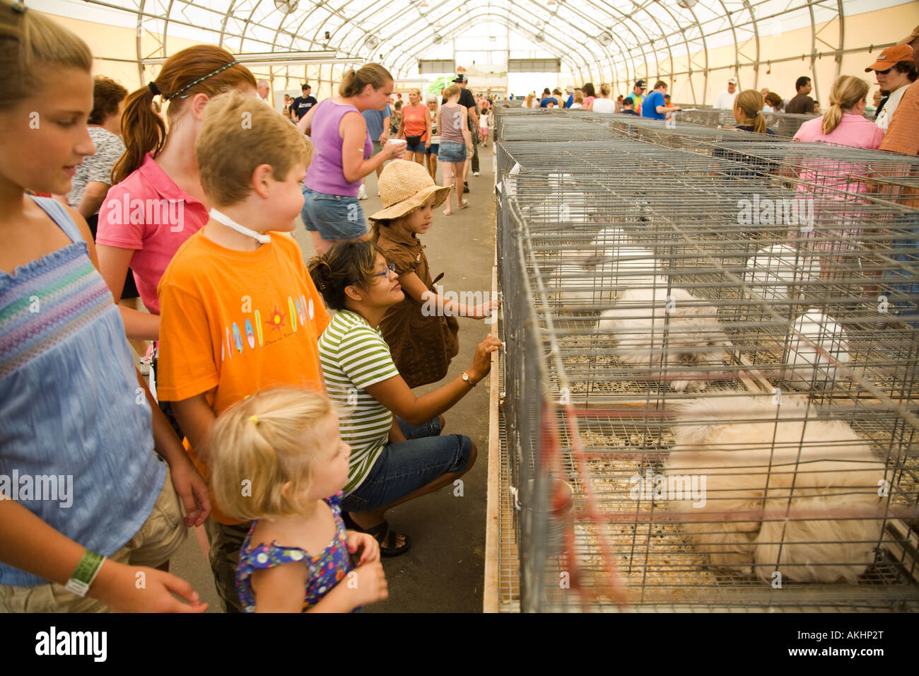 Rabbits In Cages Stock Photos & Rabbits In Cages Stock Images - Alamy