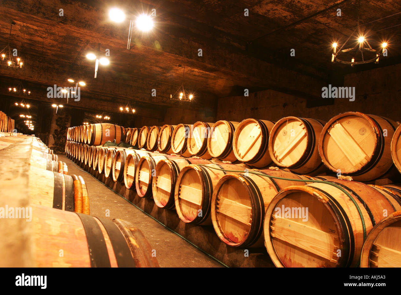 the wine cellar at chateau mouton rothschild bordeaux france - Stock Image