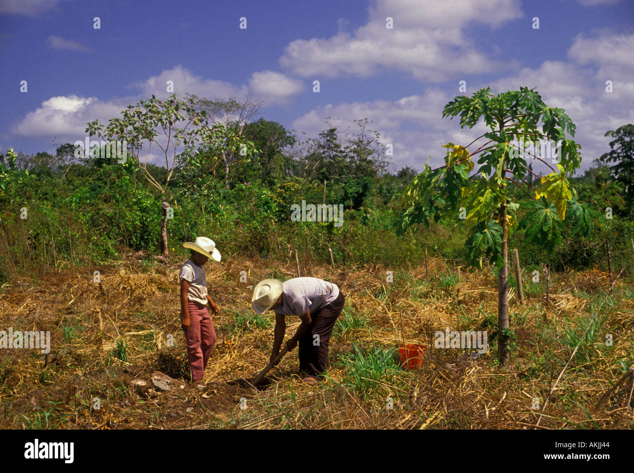 Agriculture yucatan