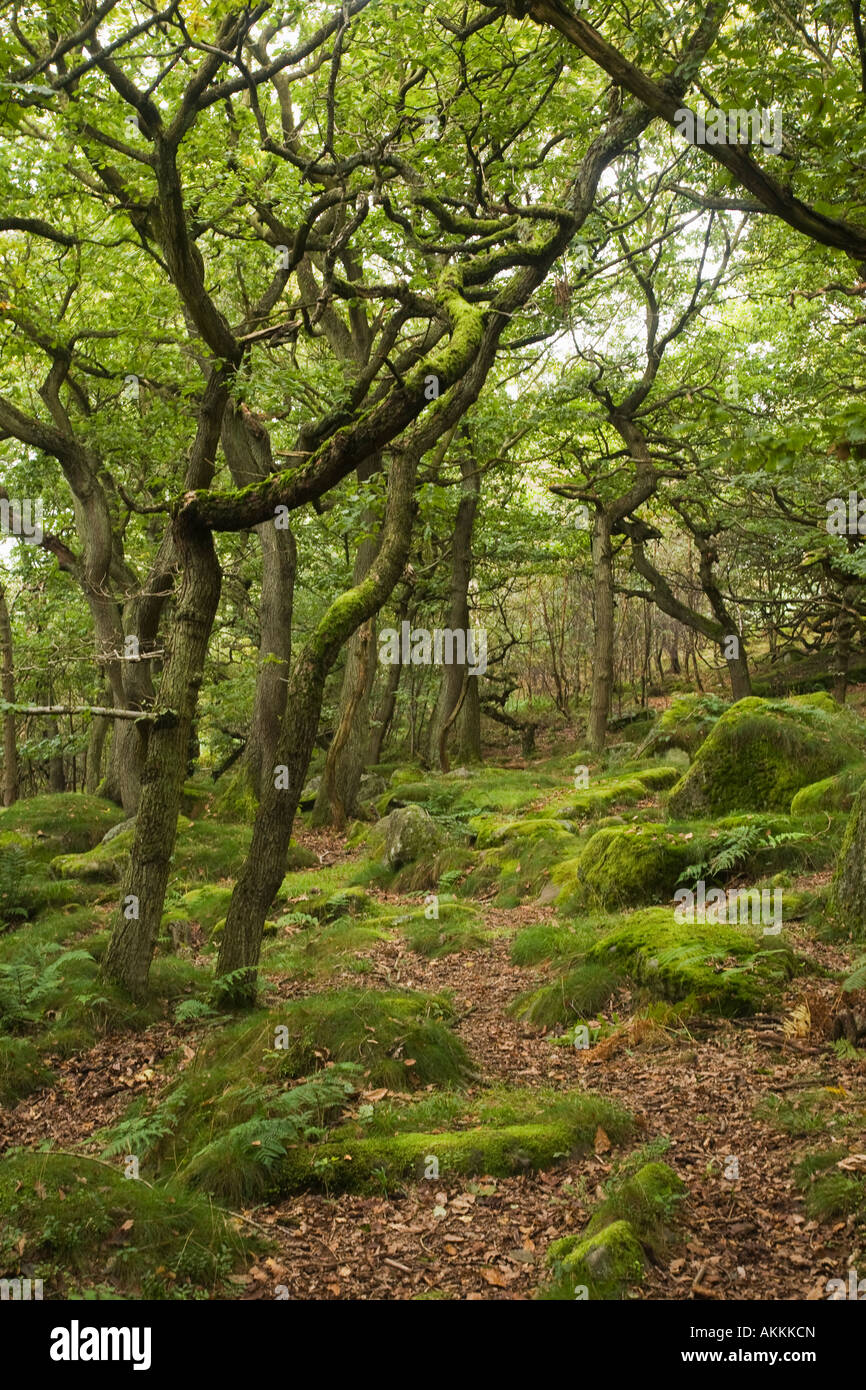 Padley Gorge Derbyshire Peak District National Park Ancient oak woodland - Stock Image