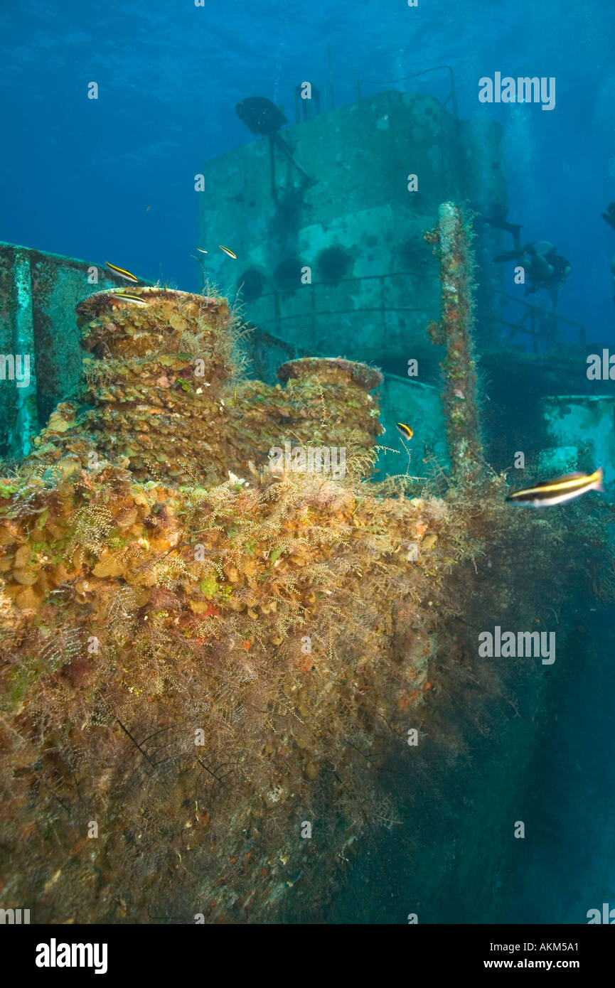 Growth on C53 shipwreck Cozumel Mexico - Stock Image
