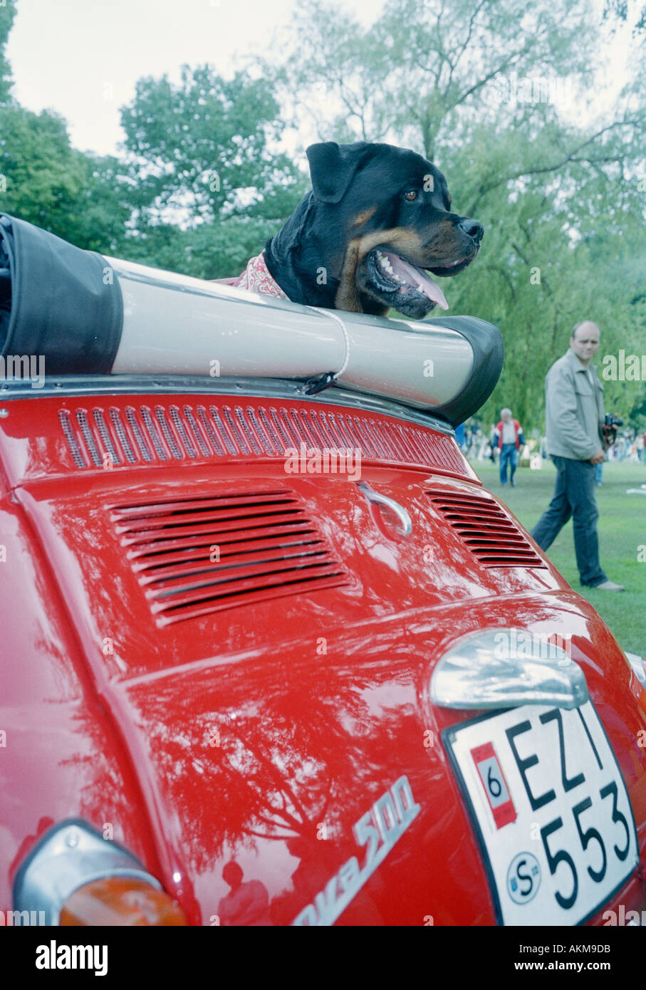 a red car including a folding top and a rottweiler  - Stock Image