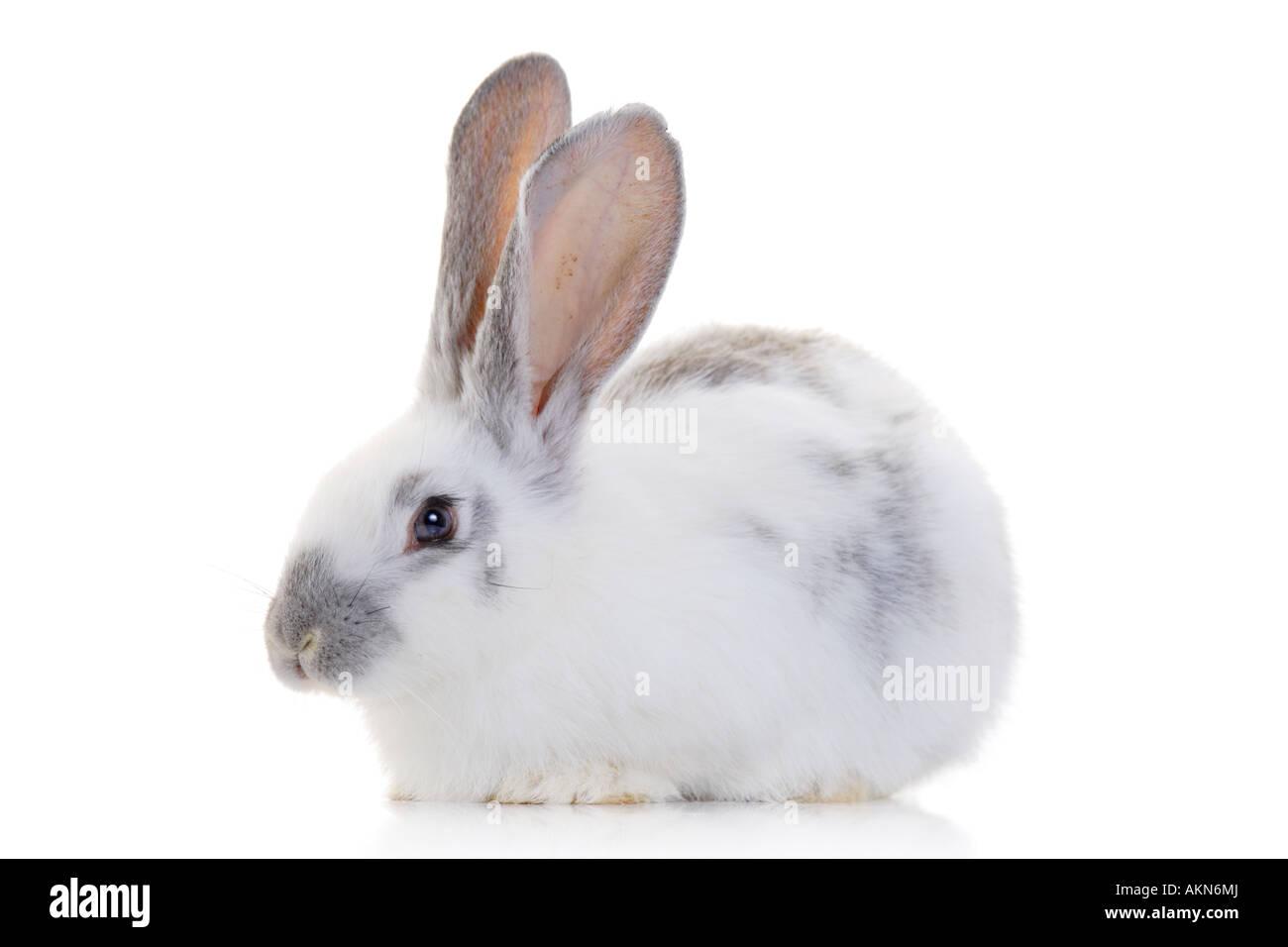 A rabbit - Stock Image