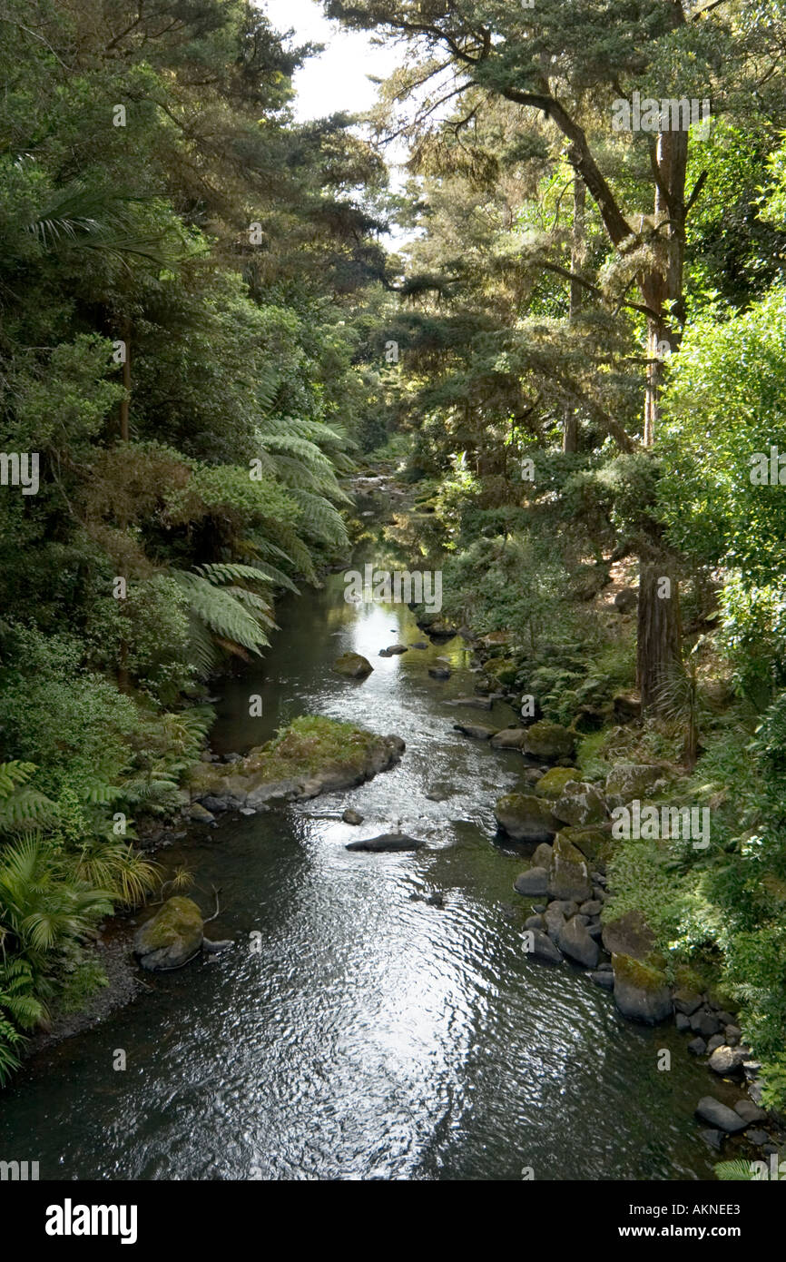 Stream near Whangarei Falls, Whangarei, Northland, North Island, New Zealand - Stock Image