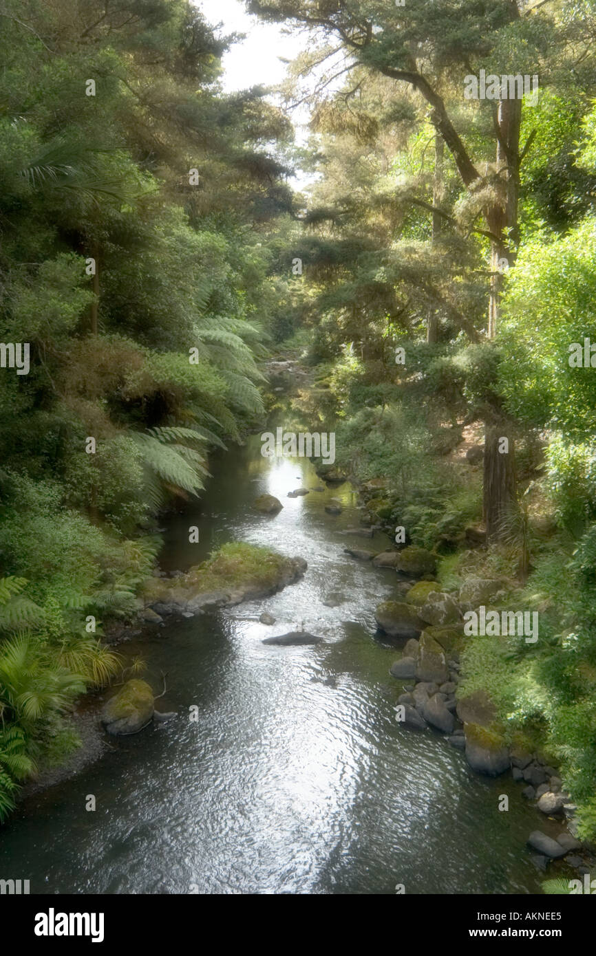 Soft Focus of a stream near Whangarei Falls, Whangarei, Northland, North Island, New Zealand Stock Photo