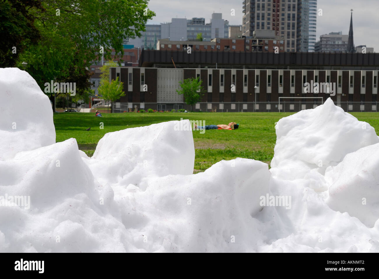 Shirtless sunbather on green grass in Spring with white snow in foreground Toronto - Stock Image