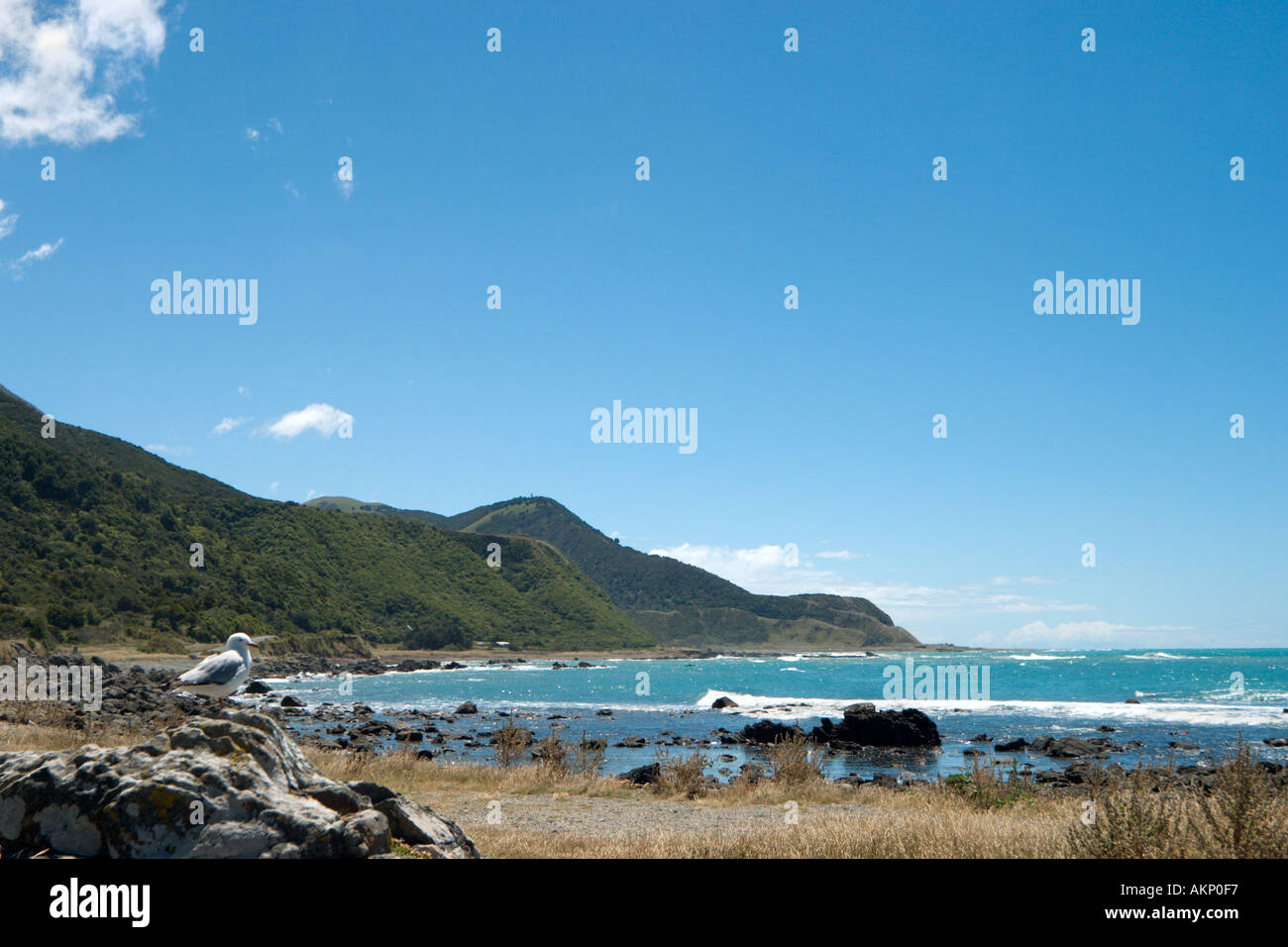 Coast on SH1 north of Kaikoura, South Island, New Zealand - Stock Image