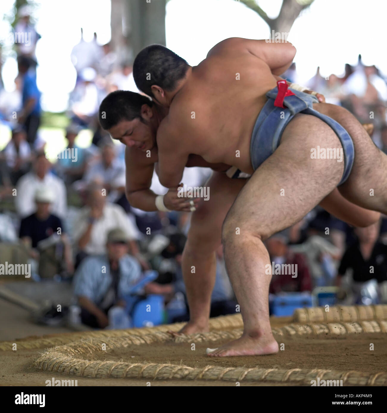 All japan university sumo tournament towada city wrestlers wrestling fight  fighting outdoors competition amateur